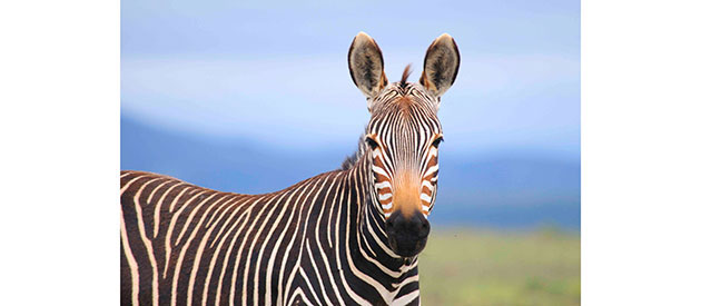 SANParks : MOUNTAIN ZEBRA NATIONAL PARK